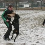 dressage chien haguenau